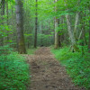 Le souci des forêts de Richard Powers