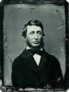 thoreau-type 2